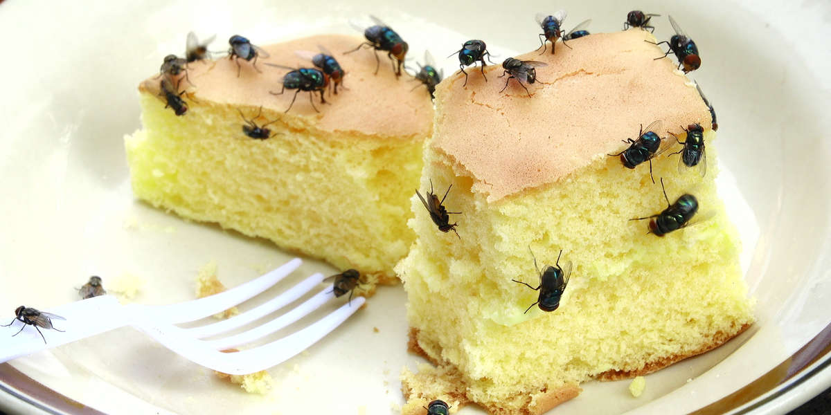 How to control flies in your home